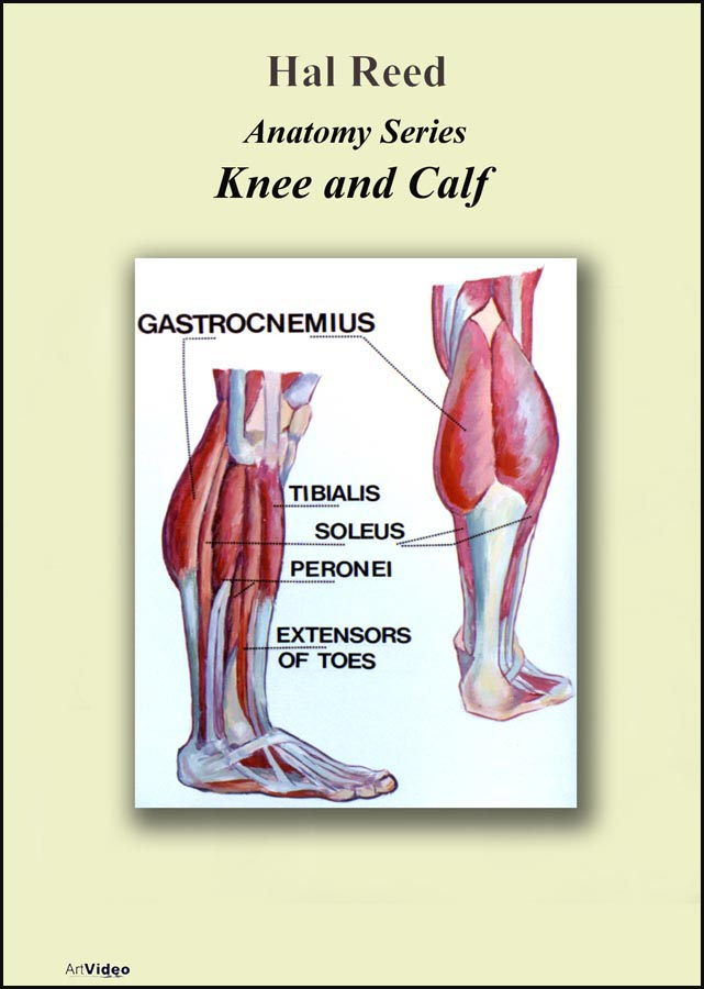 Reed, Hal: AN1314 - Knee & Calf