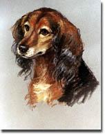 Budysz, Bonnita: BZ0708 - Puppy Portrait