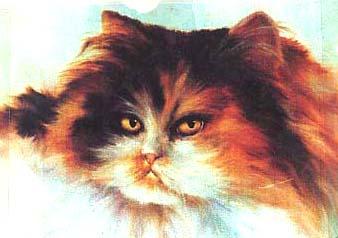 Jenkins, Gary: GJ107 - Cat