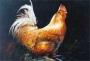 Jenkins, Gary: GJ129 - Rooster