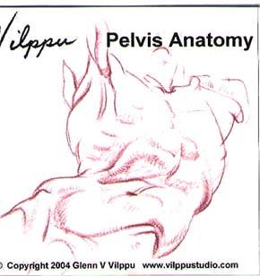 Vilppu, Glenn: GV19 - Pelvis Anatomy