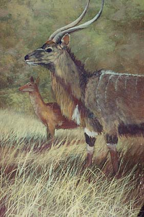 Yarnell, Jerry: JY8945 - Nyalla Antelope