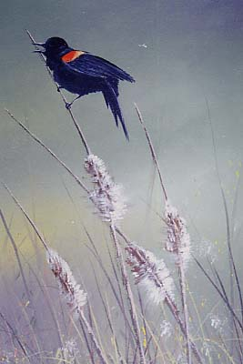 Yarnell, Jerry: JY8994 - Red Winged Blackbird