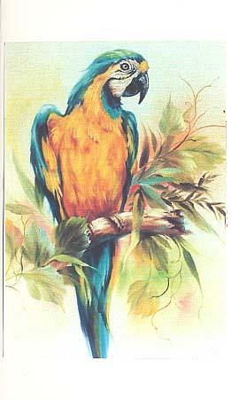 Jenkins, Kathwren: KJ205 - Blue & Gold Macaw