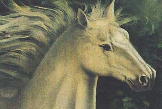 Carole, Mary: MC608 - White Stallion Portrait
